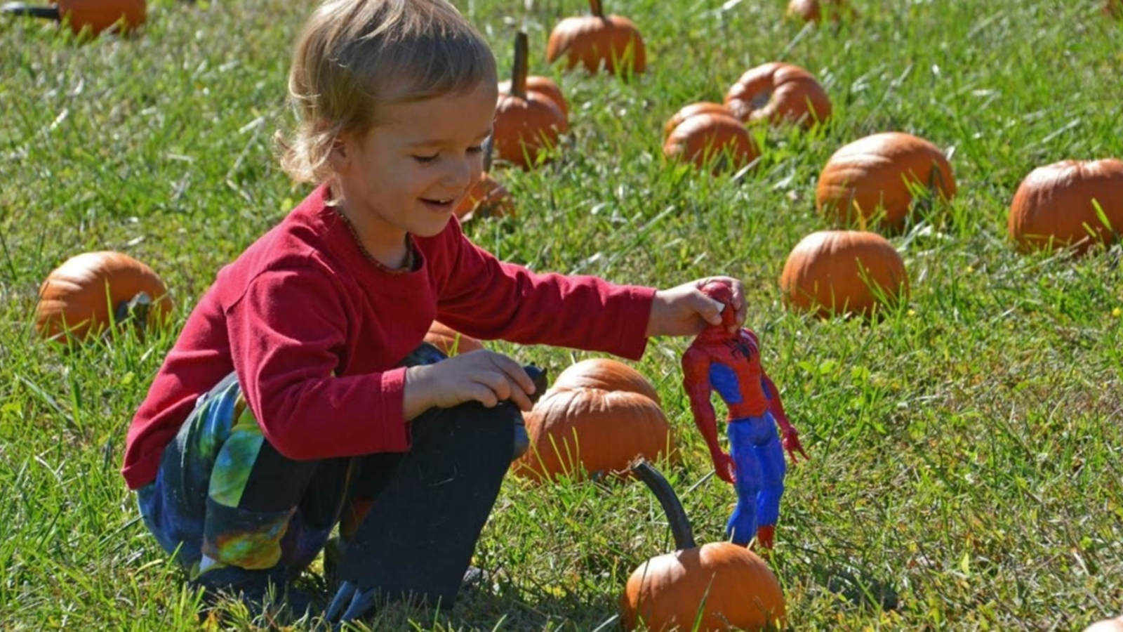 fall activities today near me